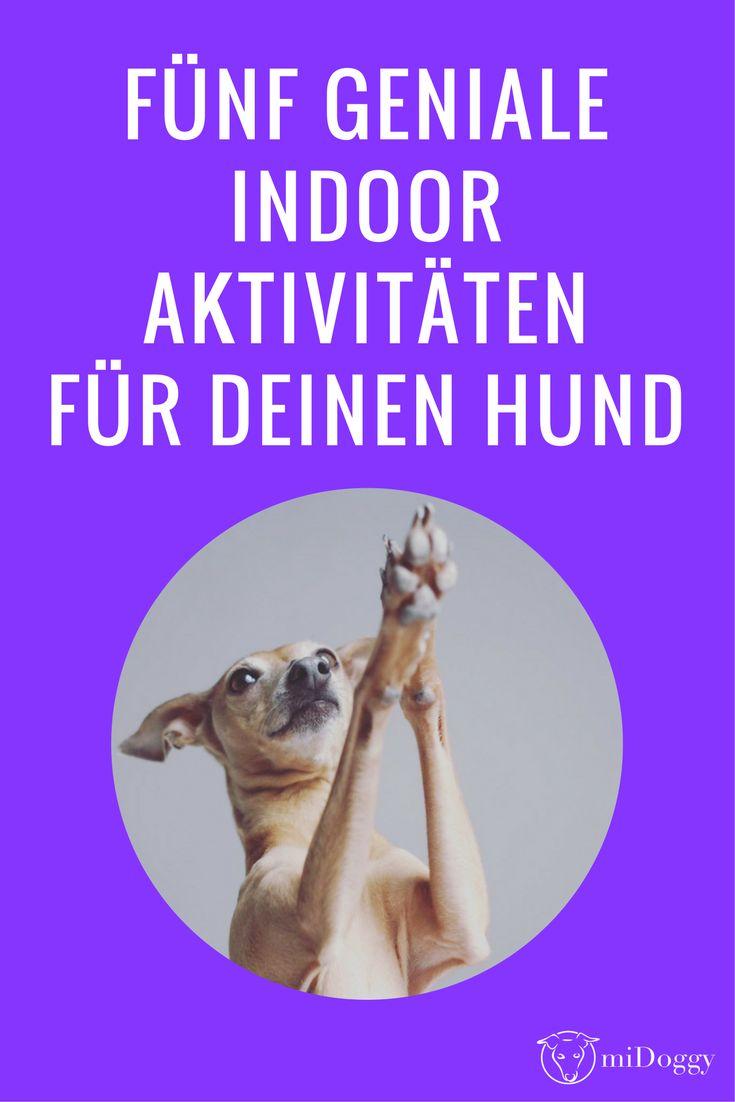 Ideen | Hunde | Beschäftigung | Indoor