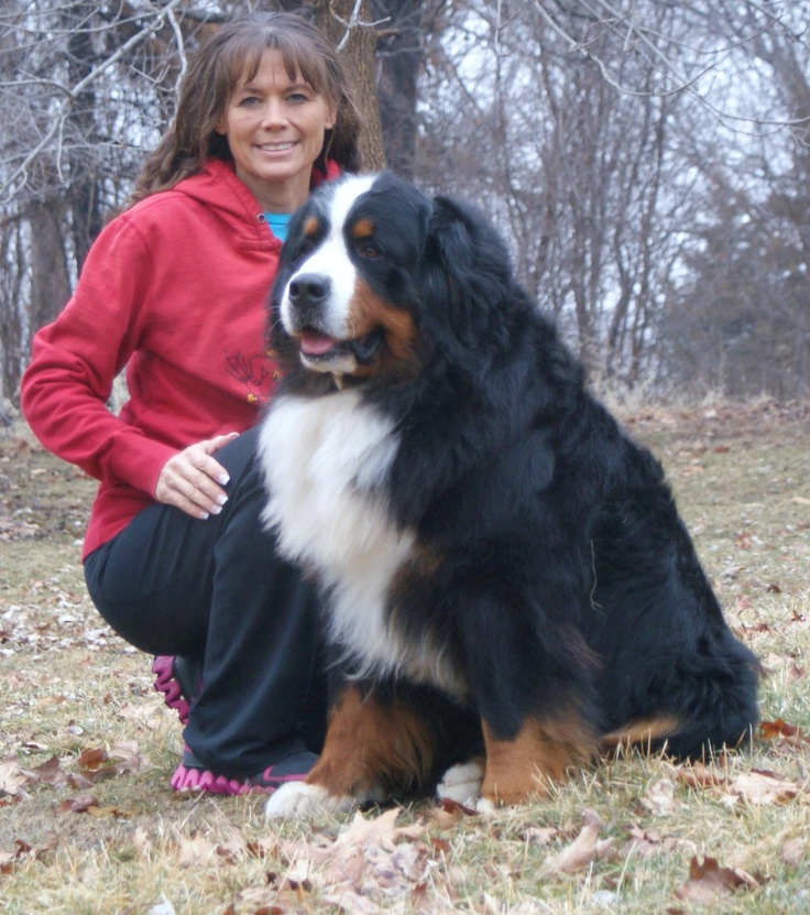 *_* large bernese (11 years)