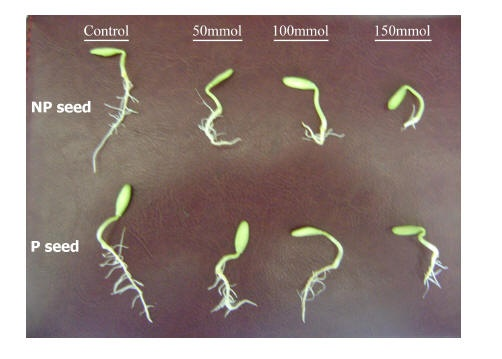 effect of salinity The effect of co2 and nacl on the second trifoliate leaf of phaseolus vulgaris l was studied salt reduced leaf area and volume volume density of the palisade mesophyll was increased and that of the intercellular spaces and abaxial epidermis was reduced salt increased the numbers of epidermal and palisade cells per.