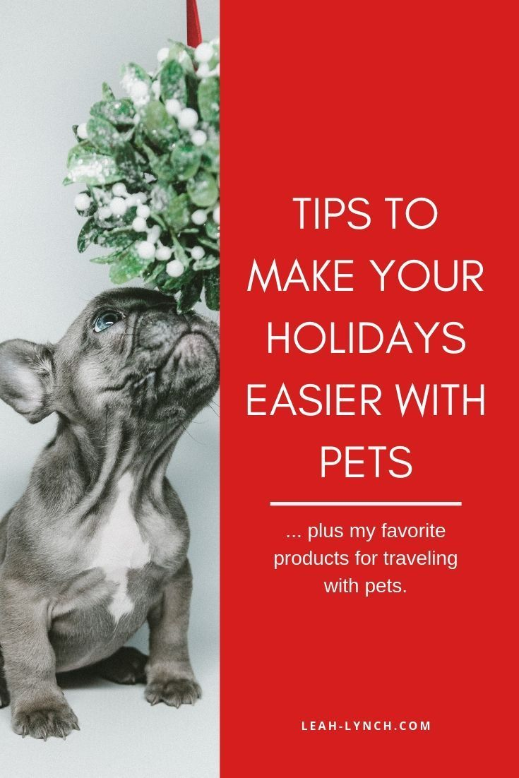 Tips To Make Your Holidays Easier With Pets Christmas On A Budget Diy Christmas Decorations For Home Christmas Decorations For The Home