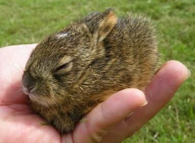 Wild Bunnies- how cute is that!?