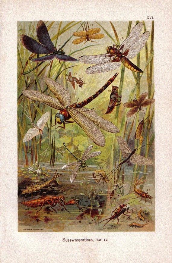 dragonflies...mayflies