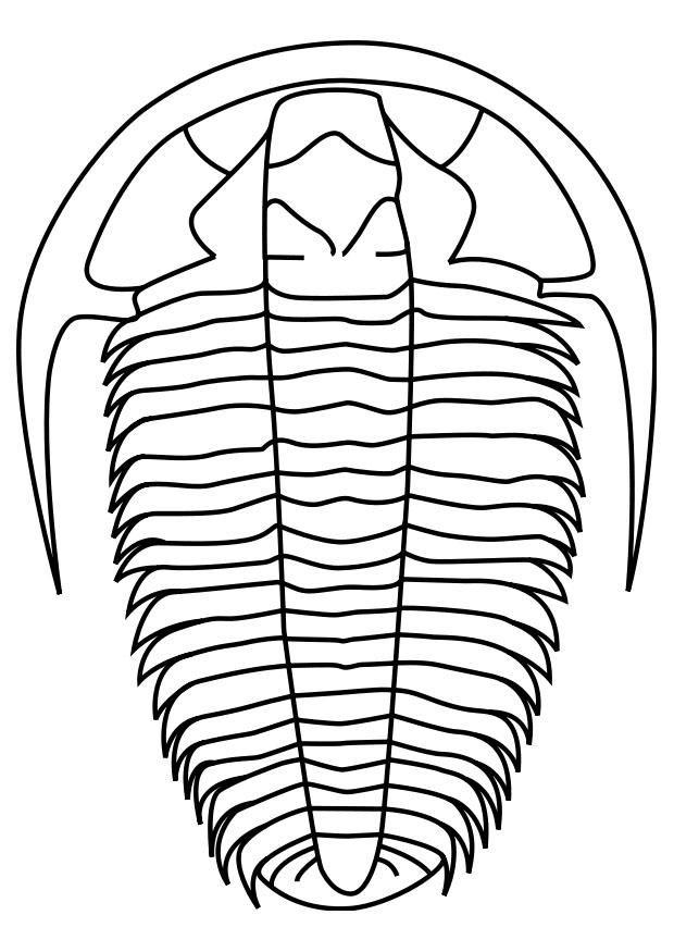 Risultati Immagini Per Trilobite Disegno Disegno Drow Image