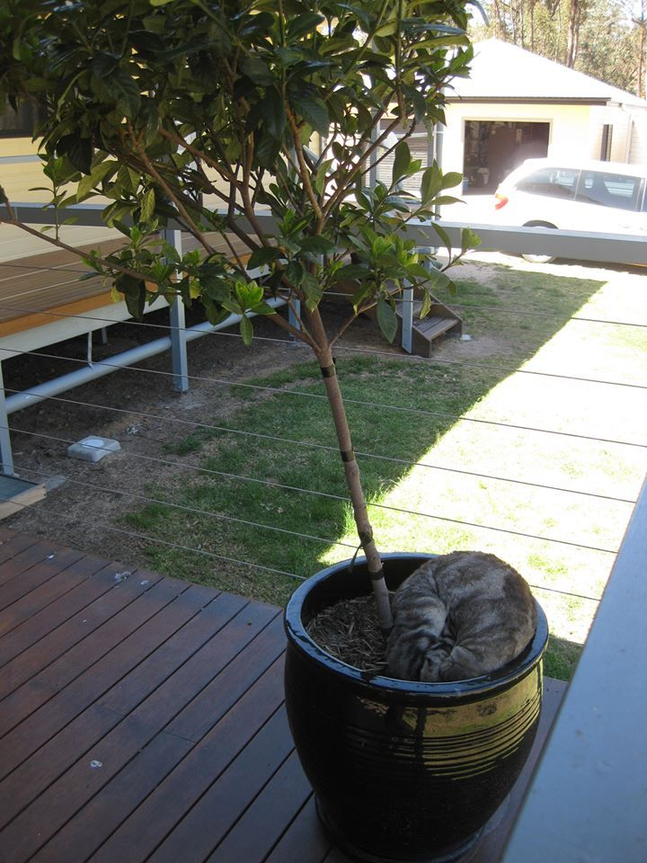 Our cat Bella's favourite sleeping place. #pets #Bella #cats