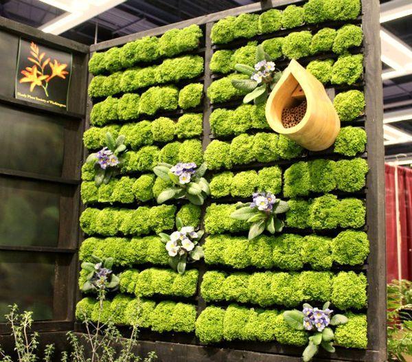 idée originale pour mur végétal dans un cadre en bois