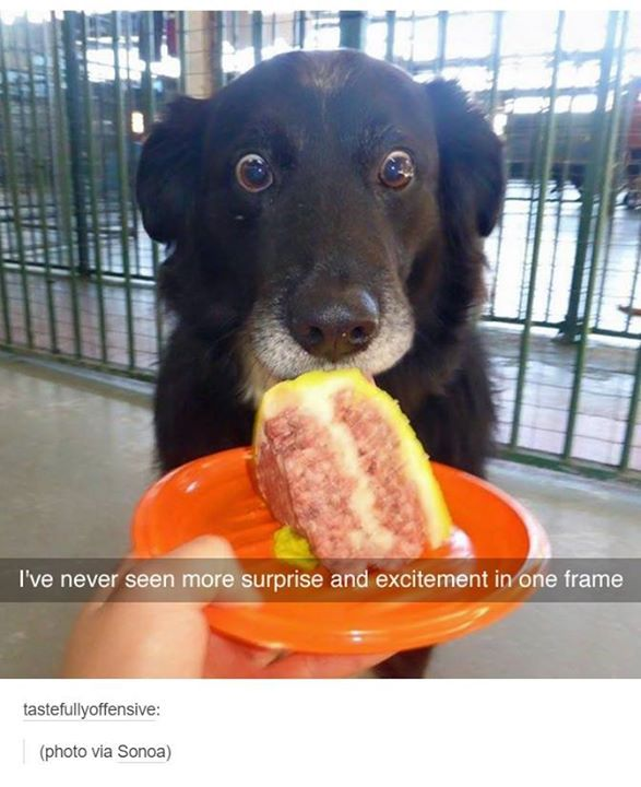 Honden zijn zo drollig. Deze kan gewoon niet geloven dat ie het krijgt :)