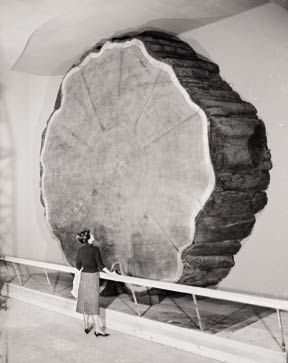 absolute dating tree rings In this absolute time instructional activity, students define radiometric dating, tree rings and varves as means to measure absolute time they are given information about each of these methods of dating.