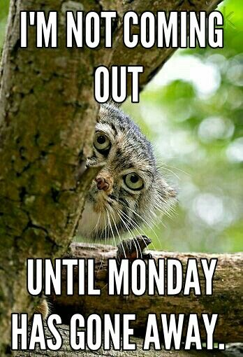 How I feel every Monday of term time.