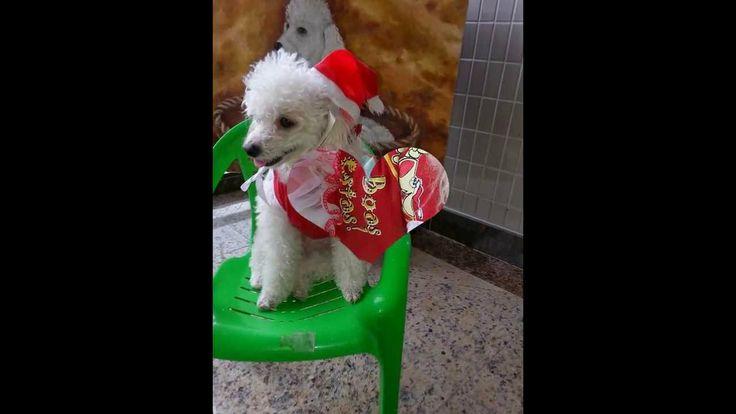 Pyxy - Feliz Natal e Próspero Ano Novo! 2013/2014