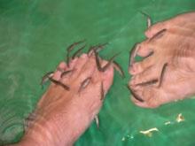 Fish Spa: visjes knabbelen dode huid van voeten