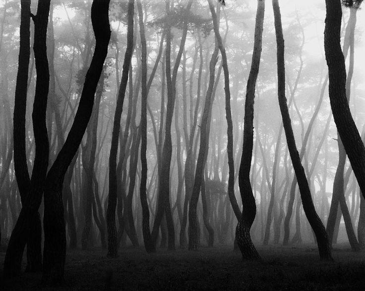Les paysages photographiques de Bae Bien-U se déploient sur la feuille blanche comme des taches d'encre noire diluée à l'eau. Formes fractales ou arrondies