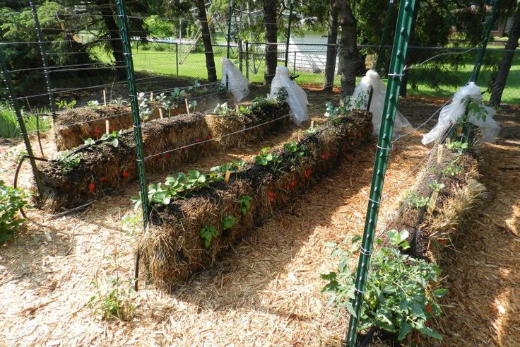 Straw Bale Gardening 101 – How To Grow Food With Less Work... | http://www.ecosnippets.com/gardening/straw-bale-gardening-101/