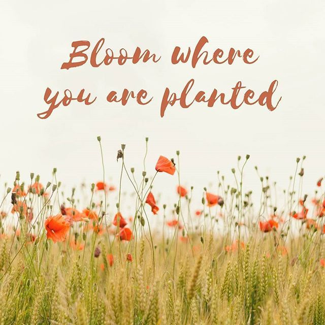 You can only be you that's it... Don't fool yourself embrace where your at. And be happy  about it. #entrepreneur #bloom #planted