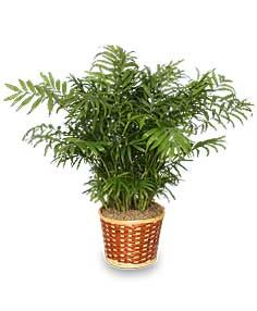 44 best indoor plants u can't kill../ indoor images on pinterest