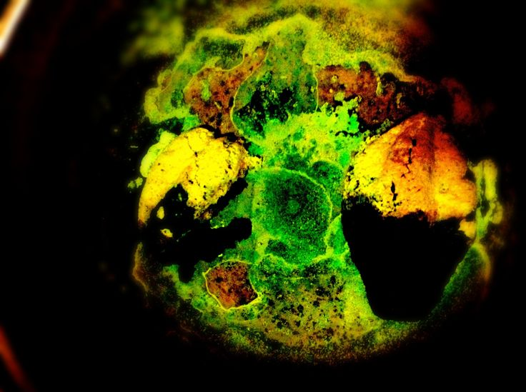 psychedelic papayas