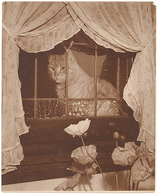 Cat in the window, 1930s / Sam Hood  Format: Photograph    Notes: Find more detailed information about this photographic collection:  http://acms.sl.nsw.gov.au/item/itemDetailPaged.aspx?itemID=153383   From the collection of the State Library of New South Wales www.sl.nsw.gov.au