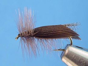 Hemingway Caddis - A great caddis fly imitation for evening fishing on the Provo.