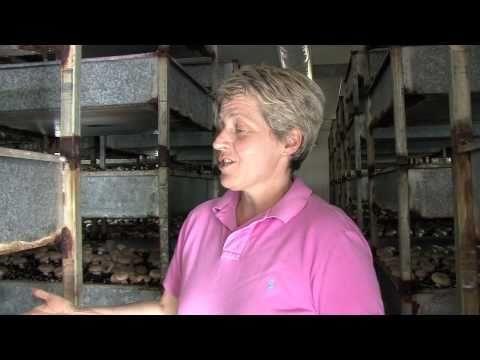 Meet Michelle Wilkinson and her #Aussie #Mushrooms from Fresh Fields Mushrooms in #Avenel in Victoria: www.AussieFarmers.com.au/MeetOurFarmers #AussieFarmers #Farmers #Vegetables