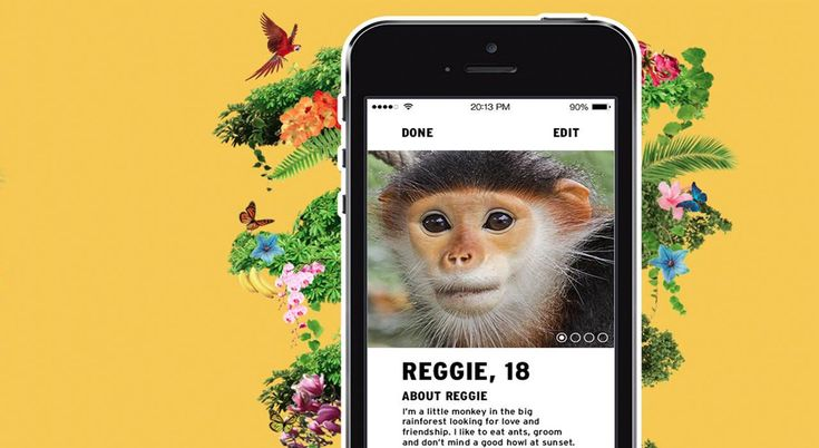 Monkey's Tinder profile raises biodiversity awareness