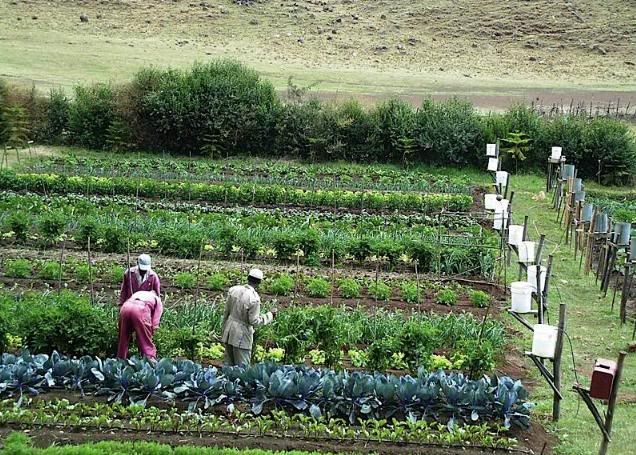 Garden Irrigation Ideas irrigation done right diy garden beds Gravity Drip Bucket Irrigation Systems For Vegetable Gardens Enhance Food Security For The Food Insecure