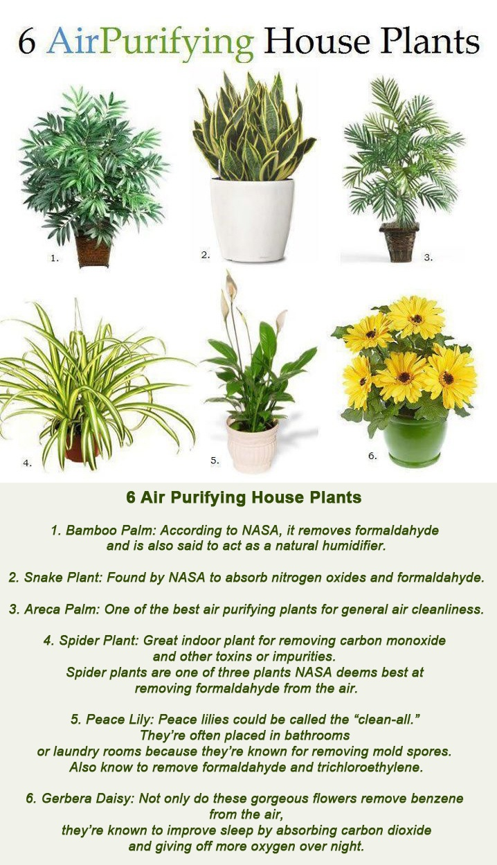 6 Air Purifying House Plants 6 Air Purifying House Plants