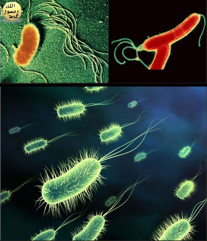 Bakteriler http://dusuneninsanlaricin.com/mikrodunyaya-ait-35-ilginc-resim/