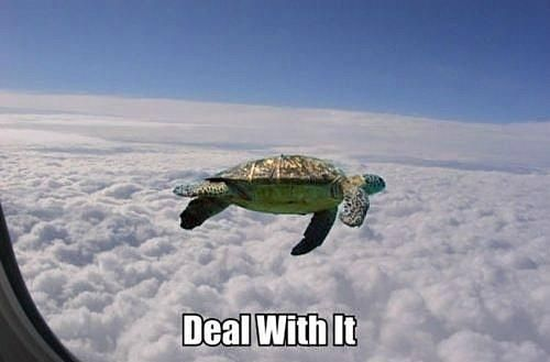 Deal With It Meme Turtle (03)