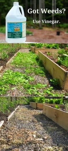 """Not that you would have any weeds in your """"Patio Garden,"""" but it's great and useful information!"""