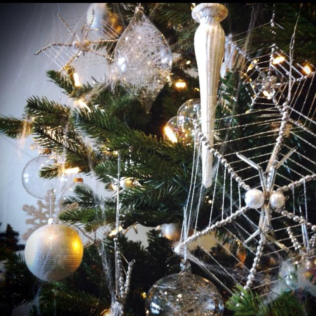116 best Spider tree images on Pinterest   Ukraine, Spider and ...