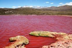 Laguna Roja de Camiña - Iquique, Chile