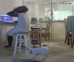 Este miúdo que não continuar com seu cão. | 28 Kids Being Idiots