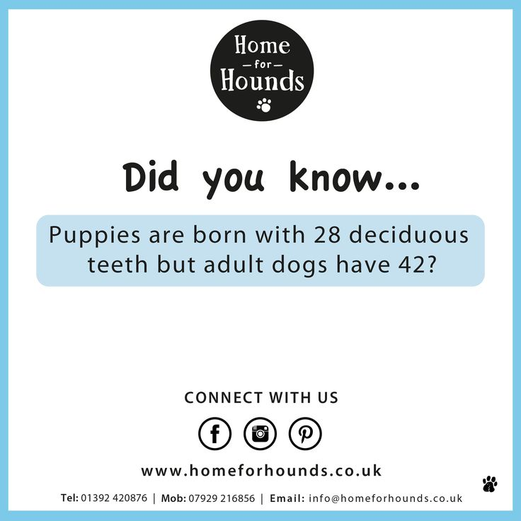 Did you know, puppies are born with 28 deciduous teeth but adult dogs have 42? #factoftheday #knowyourdog #trainyourbrain #doglove #dogdaycare #homeforhounds