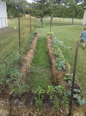 Very nice blog account of organic straw bale gardening.
