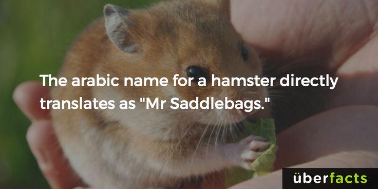 Mr. Saddlebags