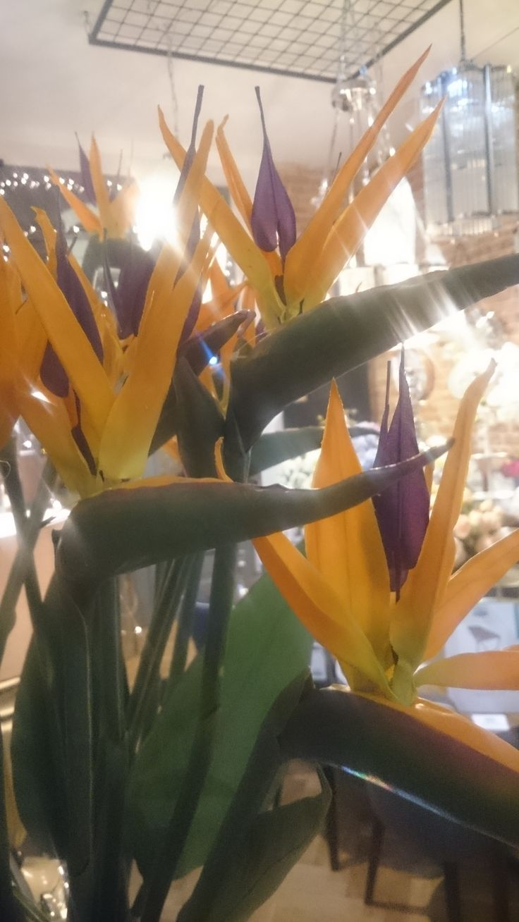 Beautiful flowers already available in Archidzieło. You can make spring come to you faster