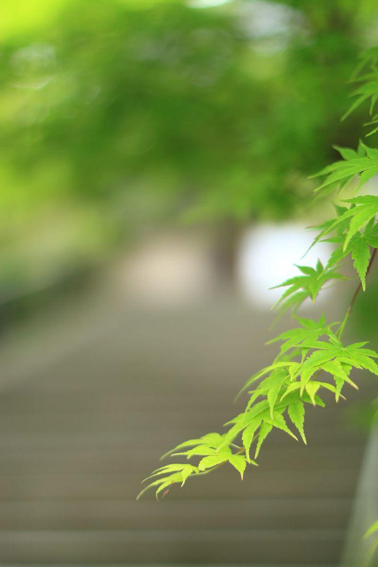 https://flic.kr/p/FAAc9x | 時の階段 | 鎌倉 円覚寺にて