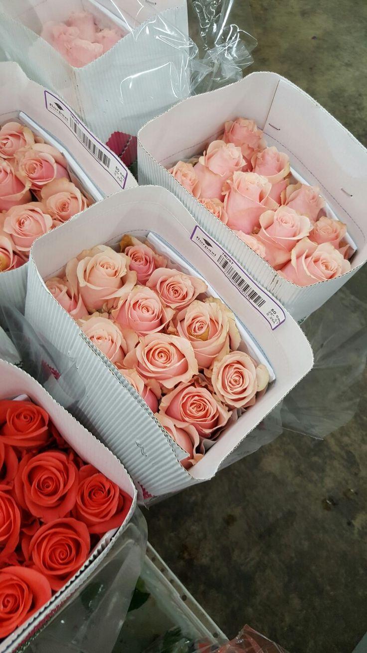 Home bulk roses peach roses - Peach Flowers