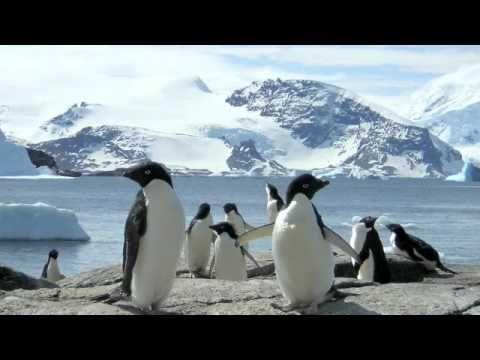 Animal Adaptations - Classroom video