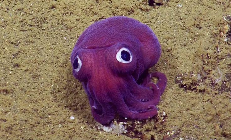 L'équipage du Nautilus a fait une rencontre inattendue : un minuscule animal violet fluo à la croisée entre une pieuvre et un livre de contes...