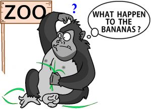 Gorilla dieting techniques.  Read more.
