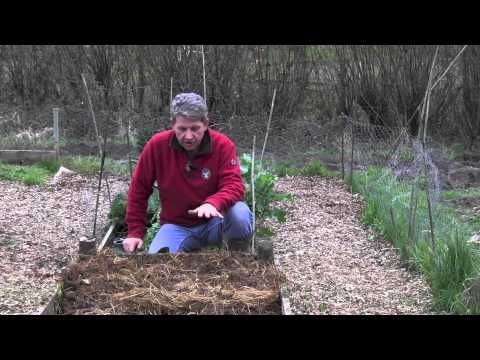 NO-DIG HOTBED --HOW TO MAKE AND PLANT - By combining the classic technique of a hotbed and a no dig method of growing we can benefit from all of the free heat that nature provides to get early crops in our vegetable gardens and at the same time be preparing the perfect growing space for courgettes or tomatoes or some of the more tender vegetables in the summer.
