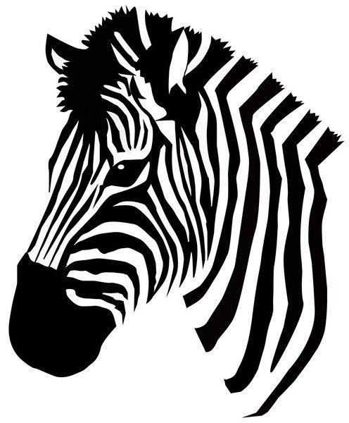 20 best zebras images on Pinterest Animals Zebras and Wild animals