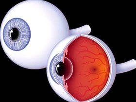 Gözün indirgenemez komplekslikte bir yapı olmadığına ve gözün evrimleştiğine dair iddiaların geçersizliği