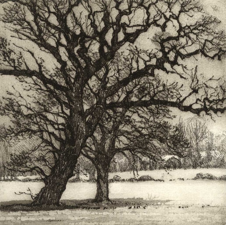 Chrissy Norman - Artist Printmaker - Etchings of Suffolk - Trees