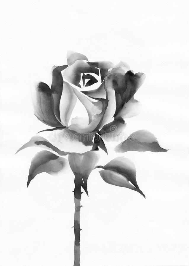 Black Rose Watercolor Rose Original Painting Asian Style Stock Illustration Watercolor Rose Rose Painting Watercolor Rose Tattoos
