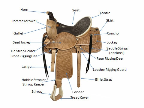 22 best saddle charts fitting charts and tips images on pinterest rh pinterest com western horse saddle diagram Saddle and Horse Tack Diagram