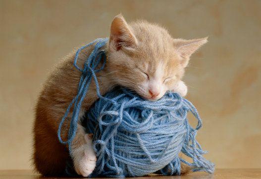 猫、ヘンなところで眠る(画像集)