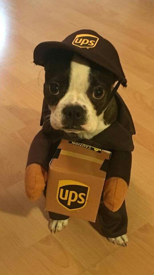 Best 25+ Cute dog costumes ideas on Pinterest | Puppy ...