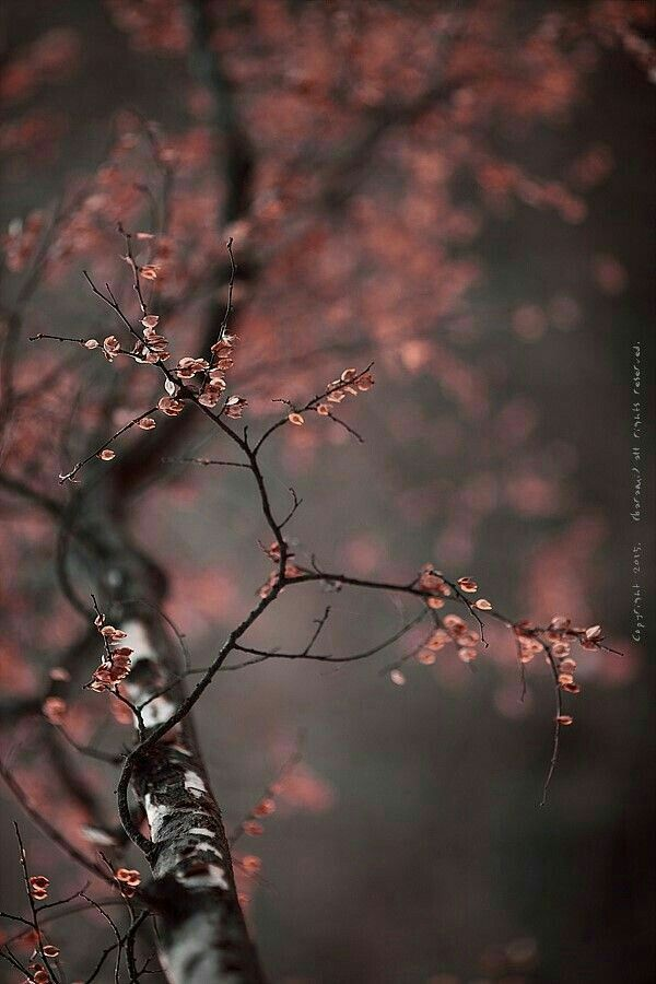 Pin By S N On Creative Photography Nature Wallpaper Beautiful Wallpapers Nature Photography