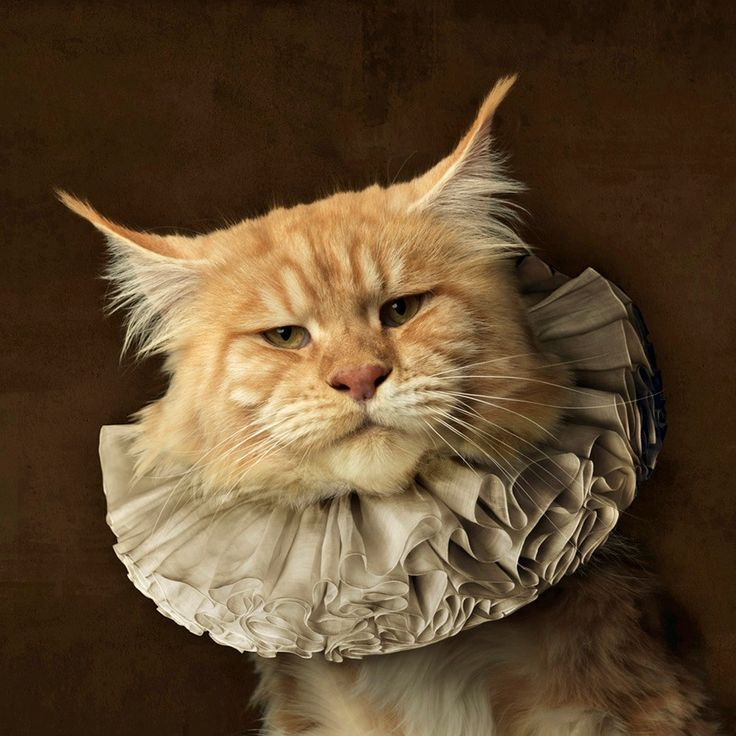 Tudor look